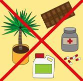 Домашний питомец: как предупредить отравление