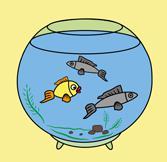 Рекомендации для первопроходцев в аквариумистике