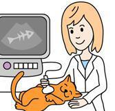 Возможности ультразвуковой диагностики в ветеринарии